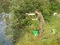 koenigsfischen-26-06-2010-025