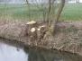 Ufer Aich 2007