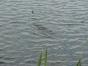 koenigsfischen-2008-038