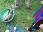 koenigsfischen-2008-094
