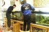 Säuberung des Aquariums